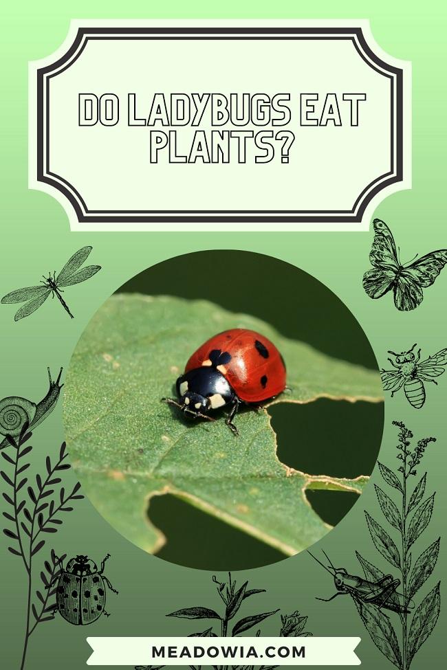 Do Ladybugs Eat Plants pin by meadowia