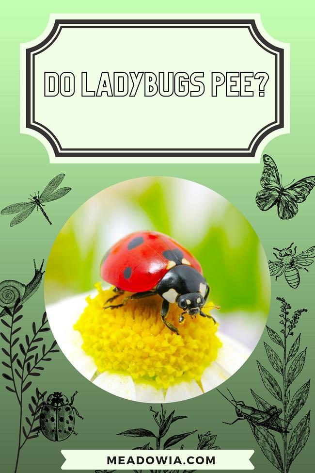 Do Ladybugs Pee pin by meadowia
