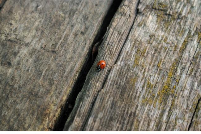 Ladybug Hibernate