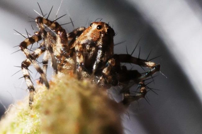 Can Garden Spiders Bite featured