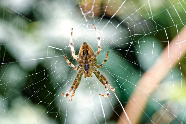 Do Garden Spiders Come Into The House featured