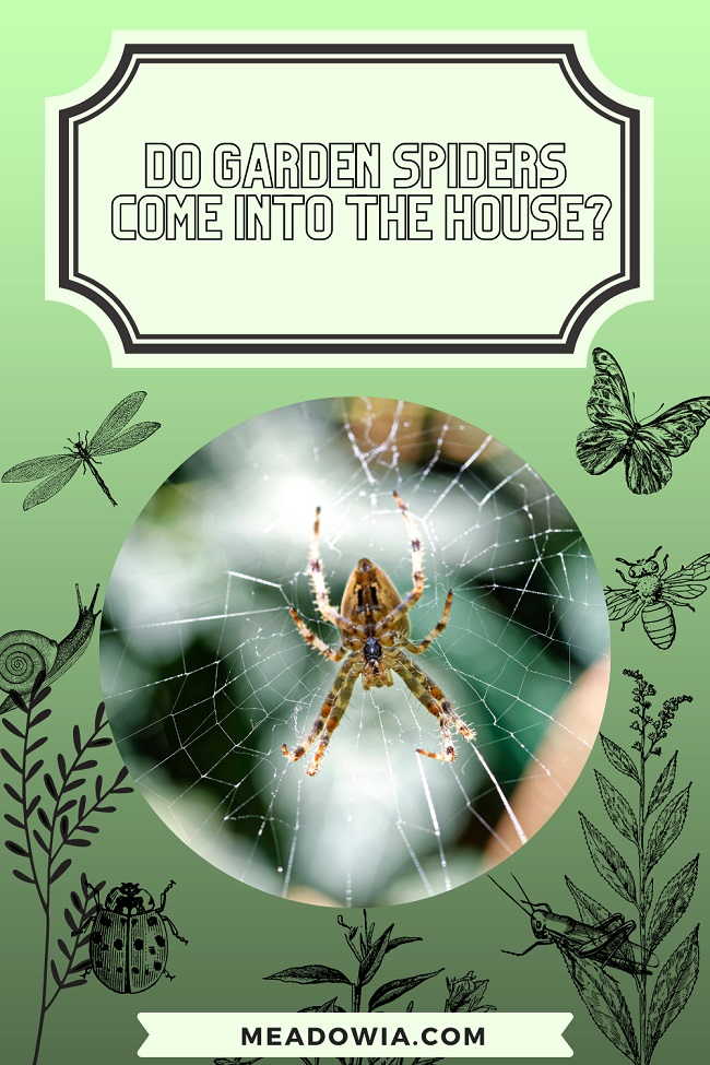 Do Garden Spiders Come into The house pin by meadowia