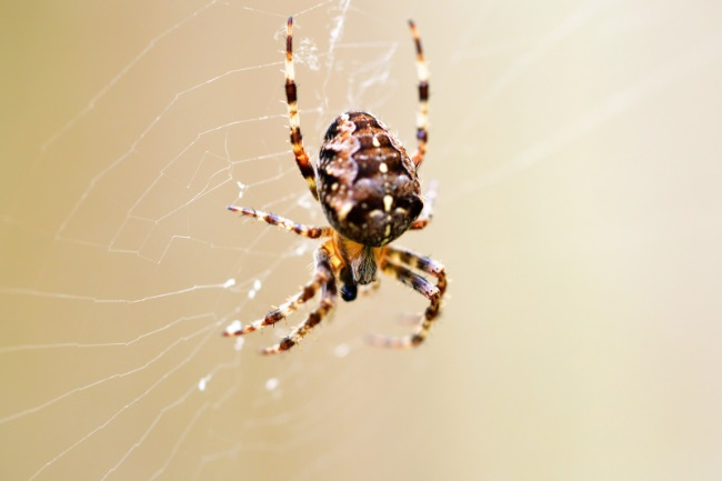Do Garden Spiders Die After Laying Their Eggs featured