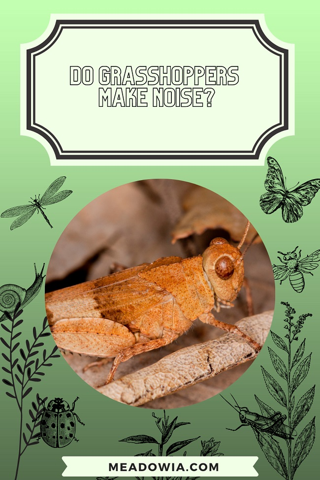 Do Grasshoppers Make Noise pin by meadowia