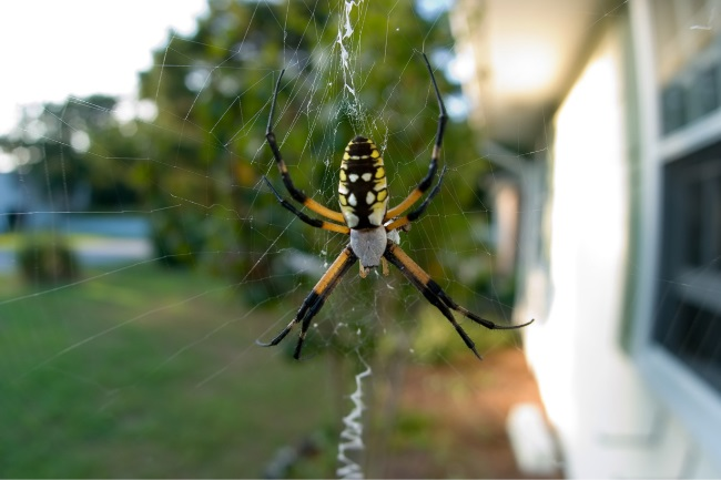 How long does a garden spider live featured