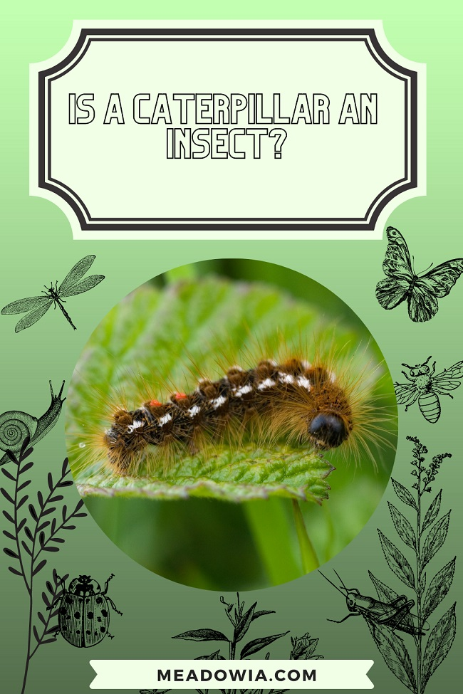 Is a Caterpillar an Insect pin by meadowia