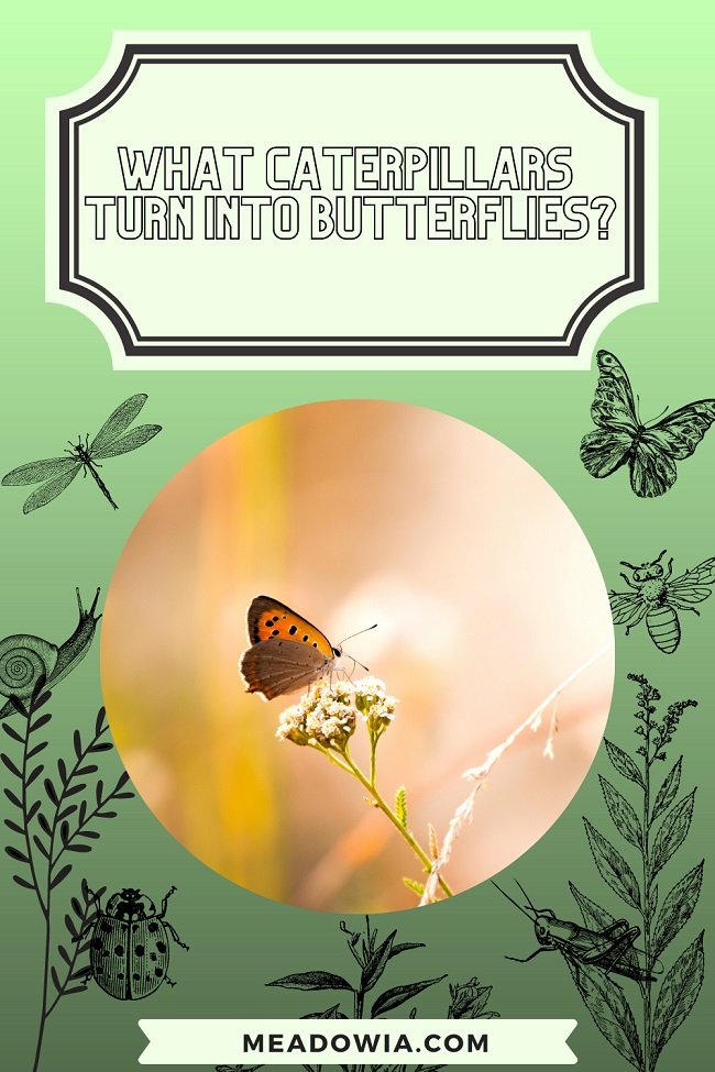 What Caterpillars Turn Into Butterflies pin by meadowia