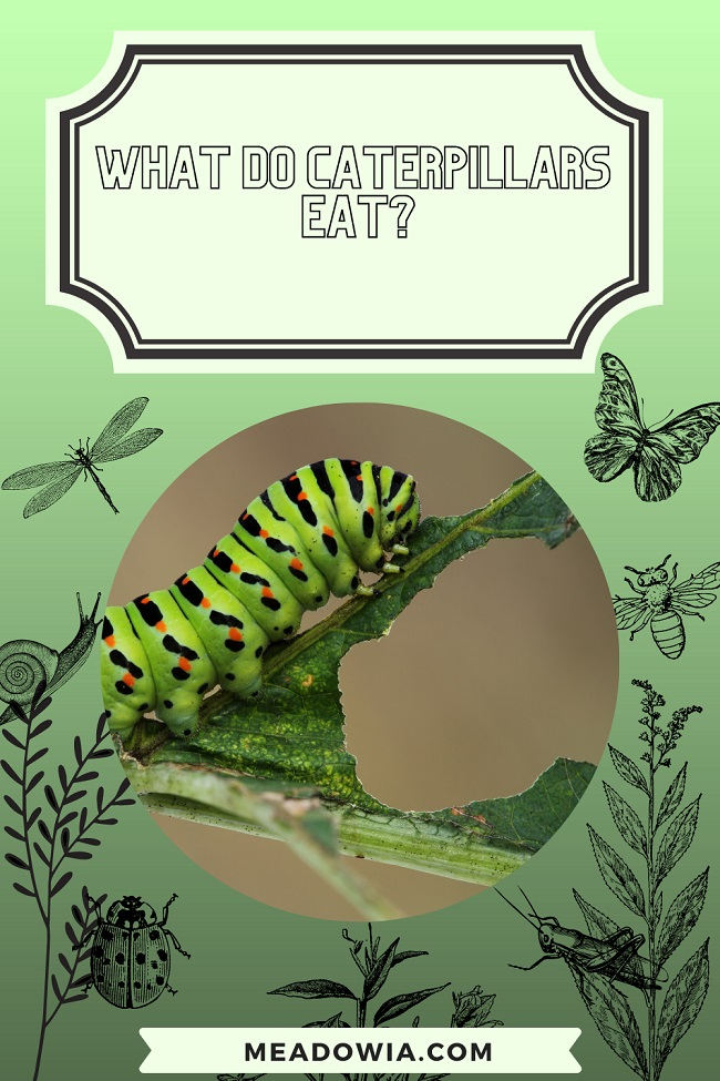 What do Caterpillars Eat pin by meadowia