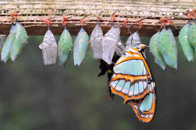 caterpillar to a butterfly