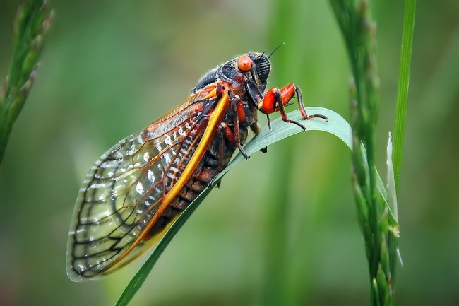 An Extensive Guide to Cicada's Lifecycle featured