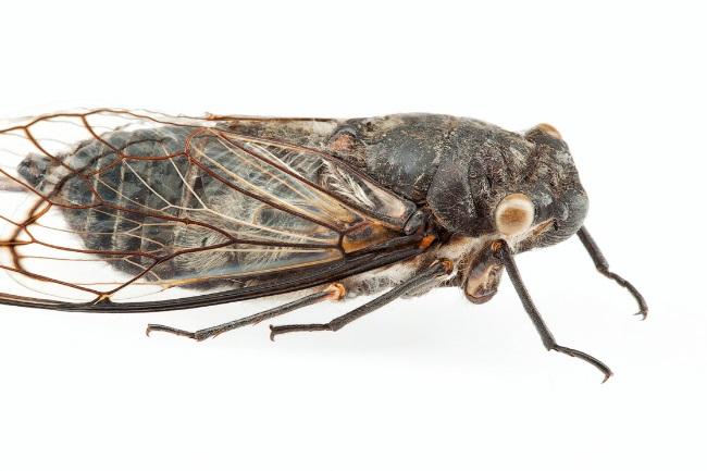 Cicadas Make Noise