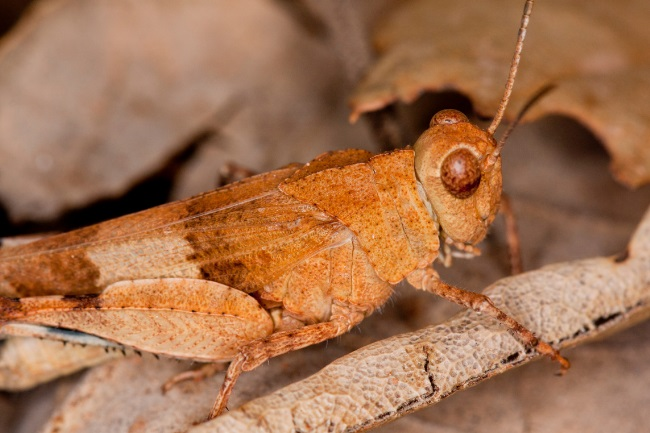 How do Grasshoppers Protect Themselves featured