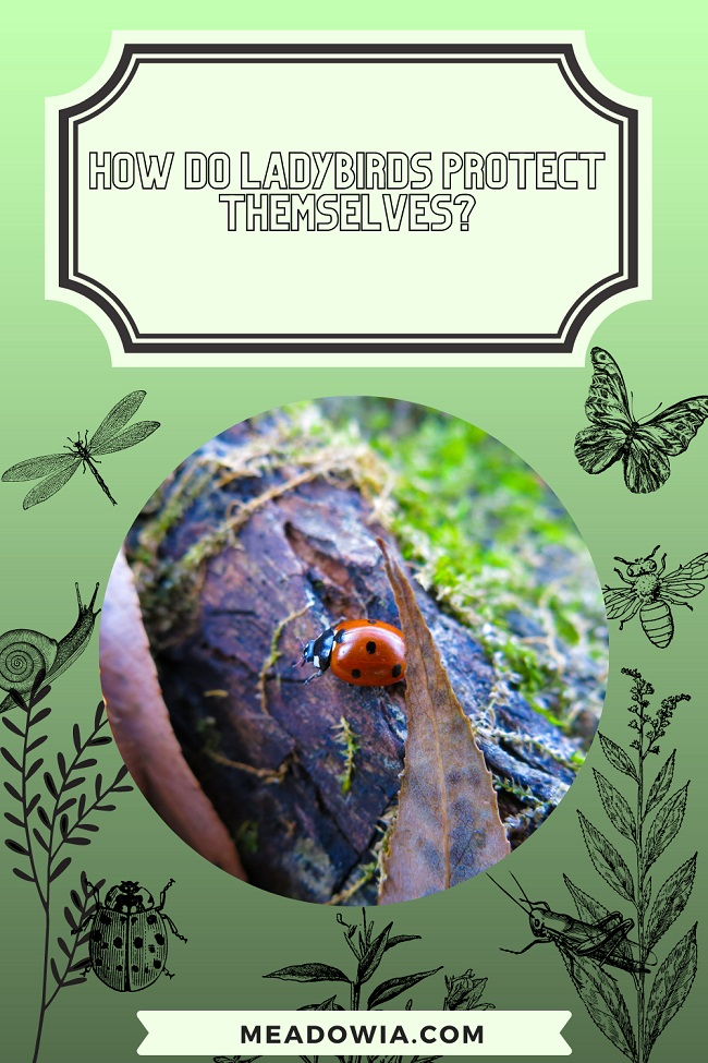 How do Ladybirds Protect Themselves pin by meadowia