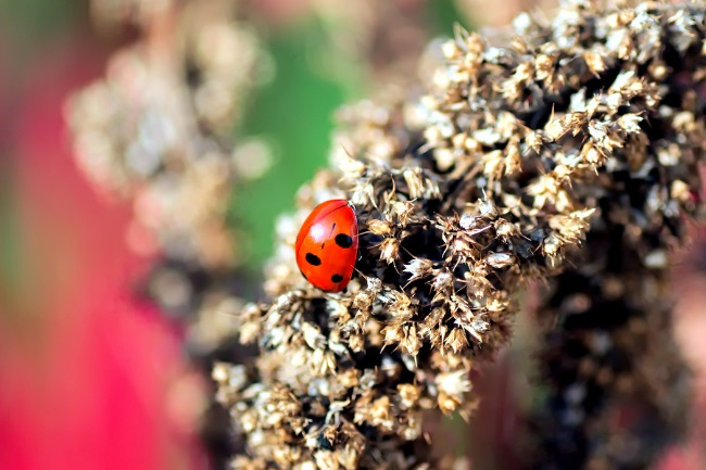 How to Attract Ladybugs to Your Garden featured