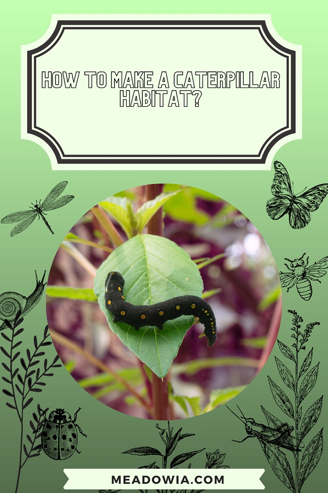 How to Make a Caterpillar Habitat pin by meadowia