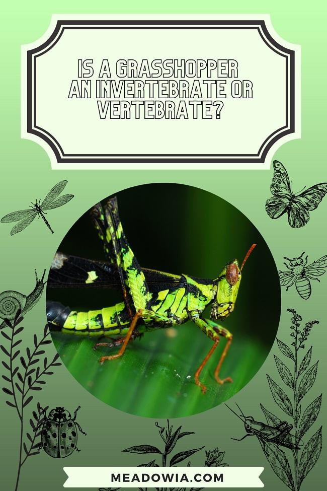 Is a Grasshopper an Invertebrate or Vertebrate pin by meadowia