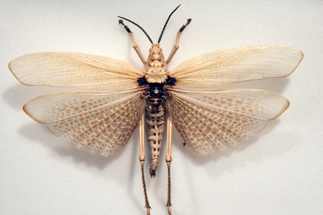 grasshoppers fly