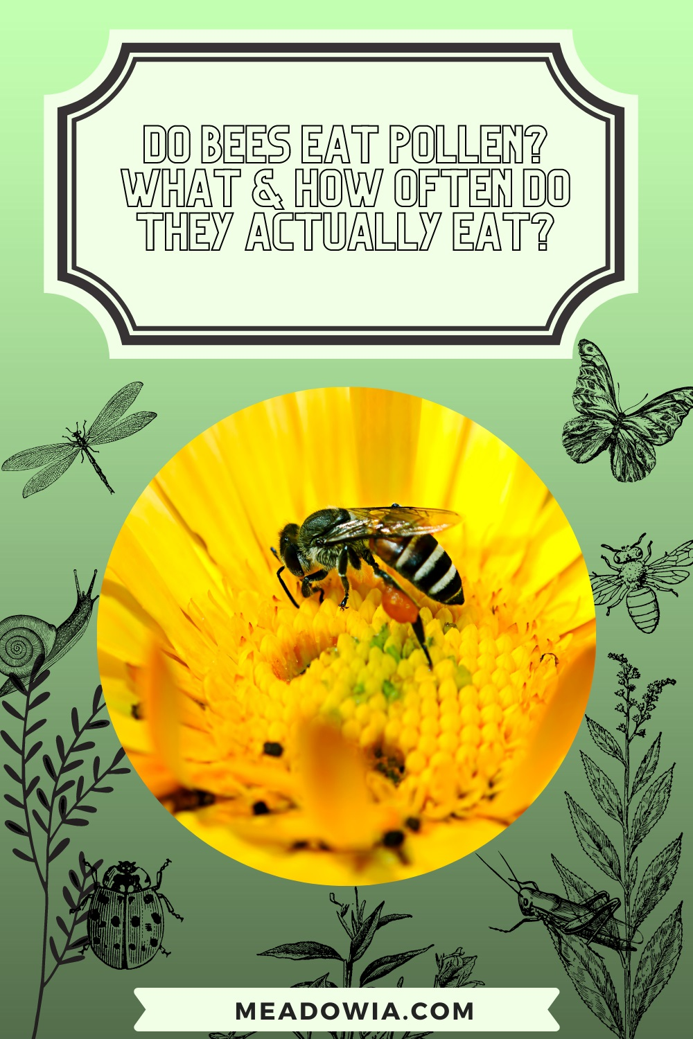 Do Bees Eat Pollen What How Often do They Actually Eat pin by meadowia