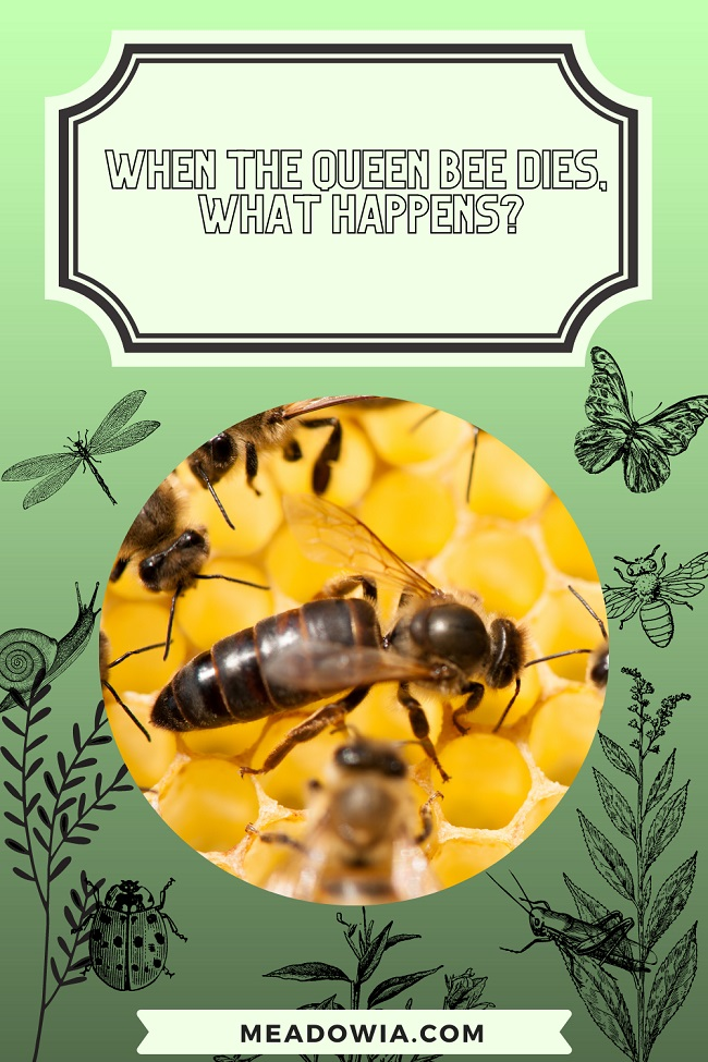 When the Queen Bee Dies, What Happens pin by meadowia