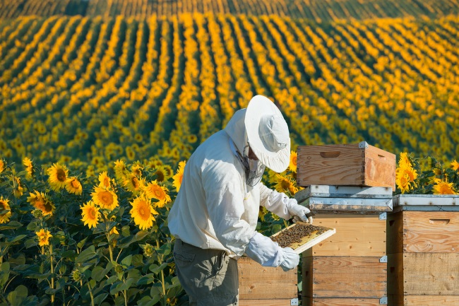 Is Beekeeping Cruel Does it Harm Bees featured