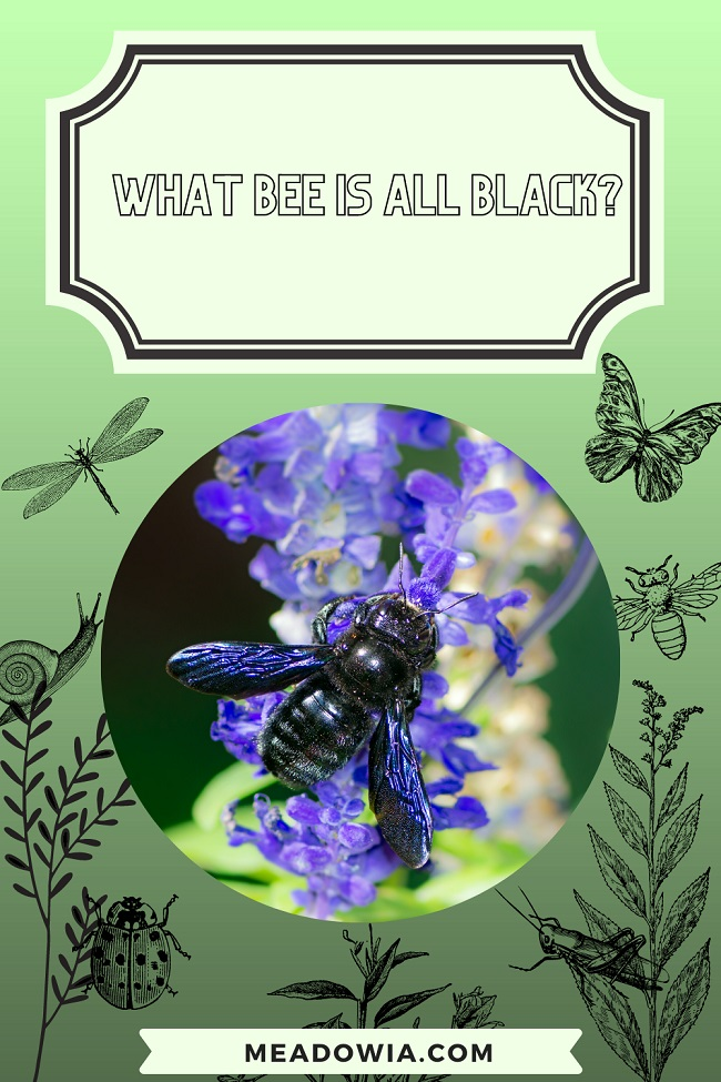 What Bee is all Black pin by meadowia
