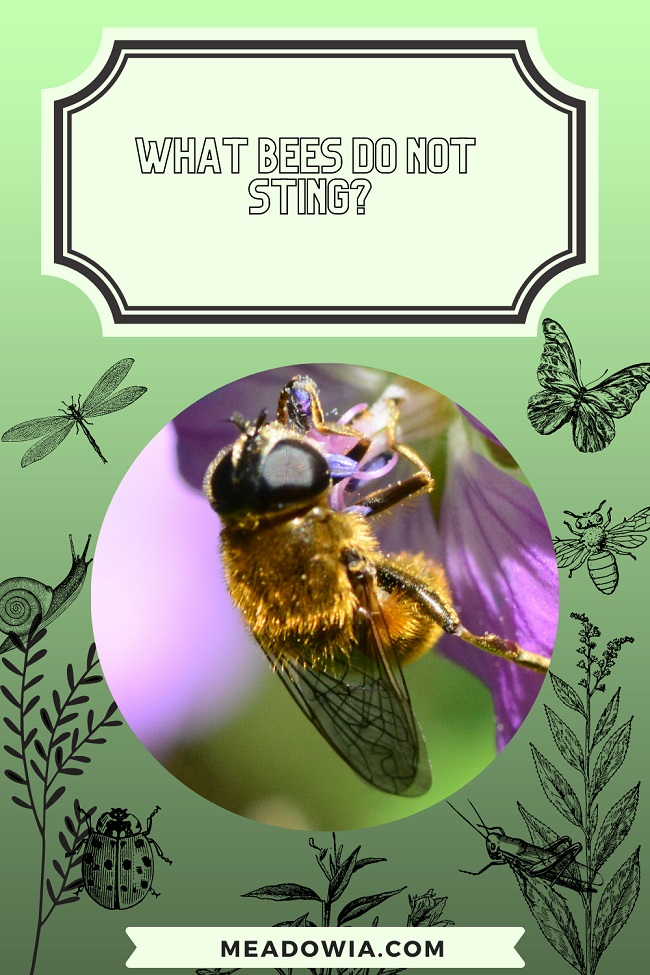 What Bees do NOT Sting pin by meadowia