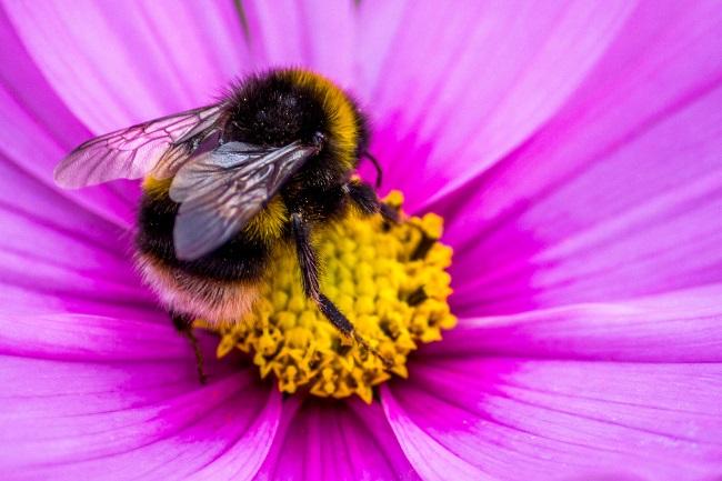 When do bumblebees eat