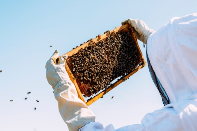 Would the Extinction of Bees Mean the End of Humanity featured