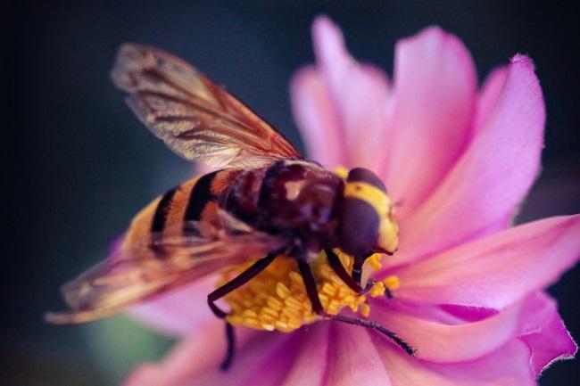 queen bees eat