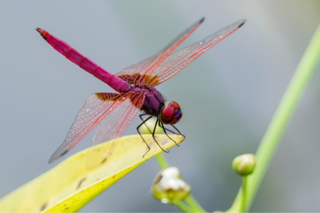 Is a Dragonfly a Vertebrate or an Invertebrate featured