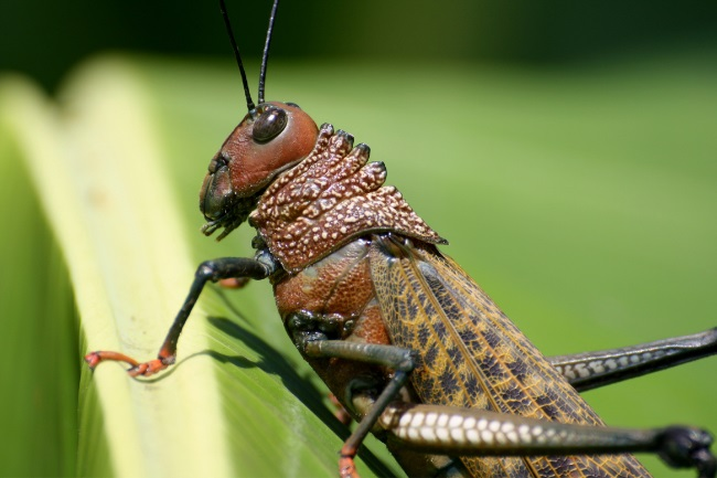 What Eats Grasshoppers featured