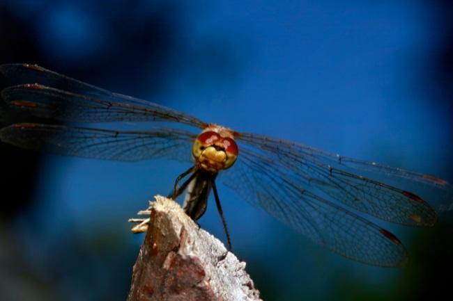 dragonfly at night