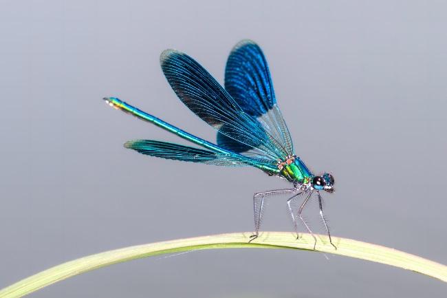 dragonfly legs