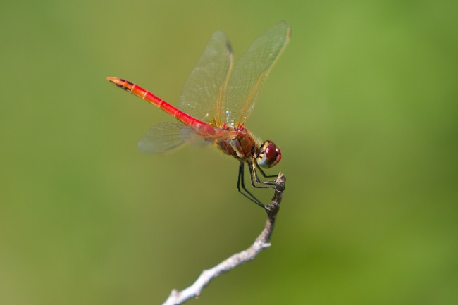 3 Ways to Attract Dragonflies to a Yard Without a Pond featured
