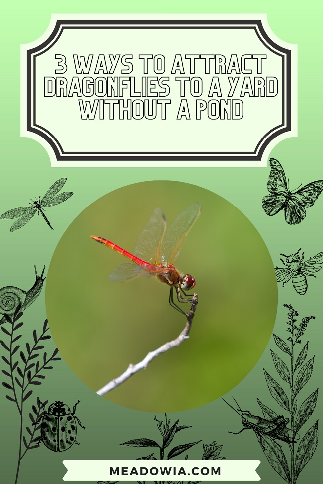 3 Ways to Attract Dragonflies to a Yard Without a Pond pin by meadowia
