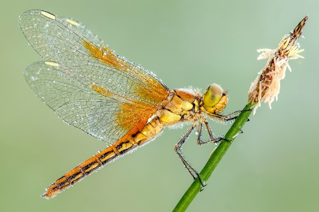 Is a Dragonfly a Producer, Consumer or Decomposer featured