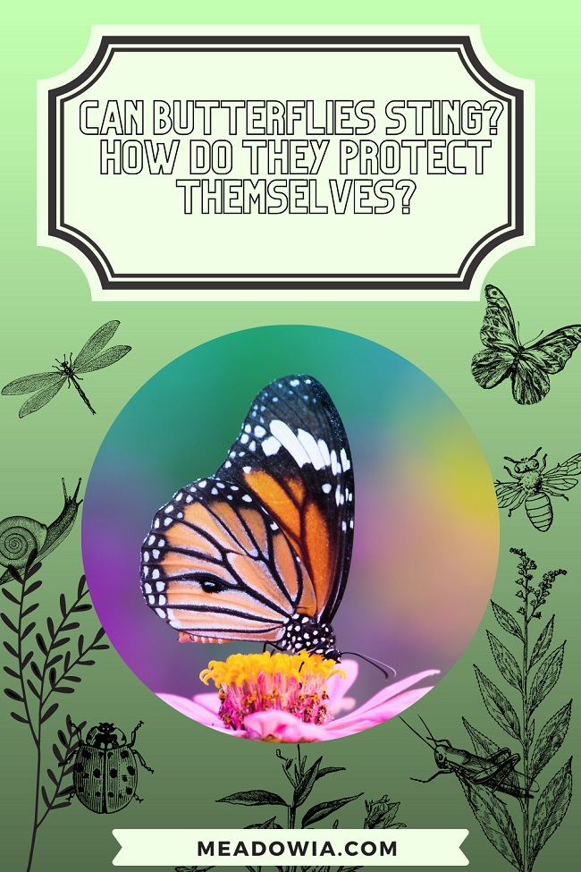 Can Butterflies Sting How do They Protect Themselves pin by meadowia