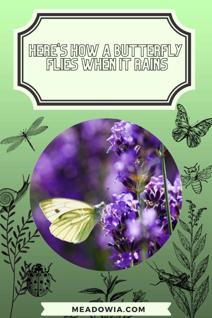 Here's How a Butterfly Flies When it Rains pin by meadowia