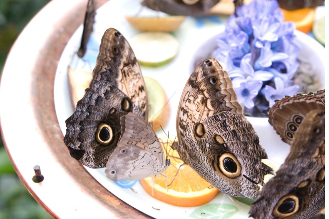 Here's How and What Does a Butterfly Eat in The Winter featured