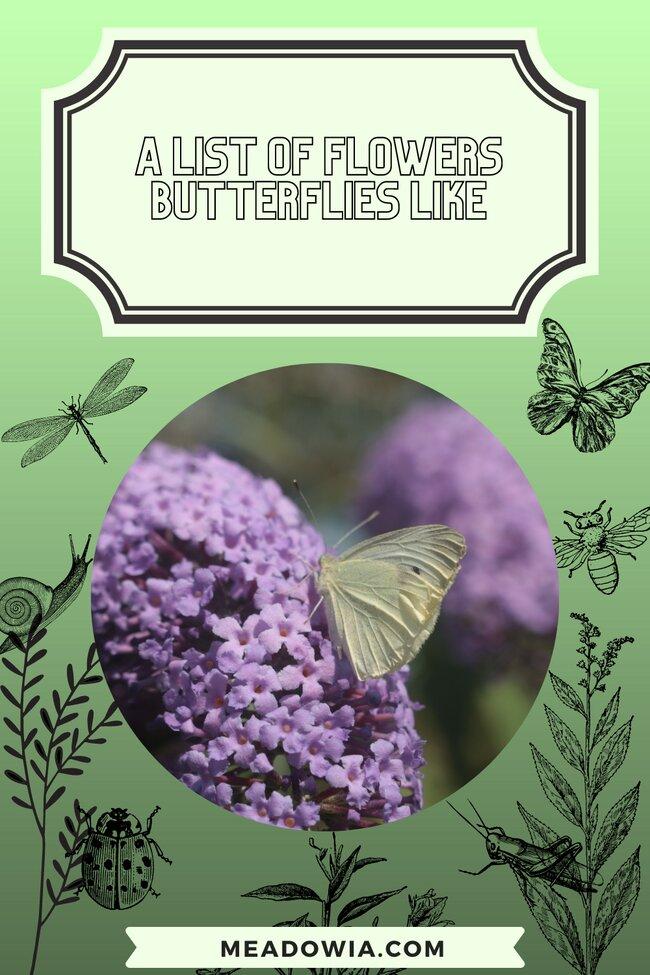 A List of Flowers Butterflies Like pin by meadowia