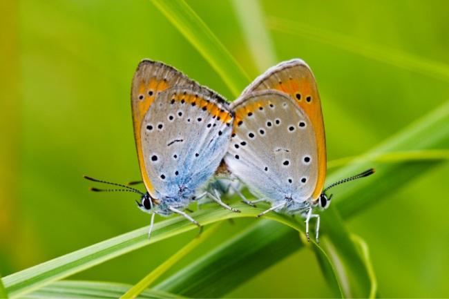 Do Butterflies Mate for Life Eternal Love or featured