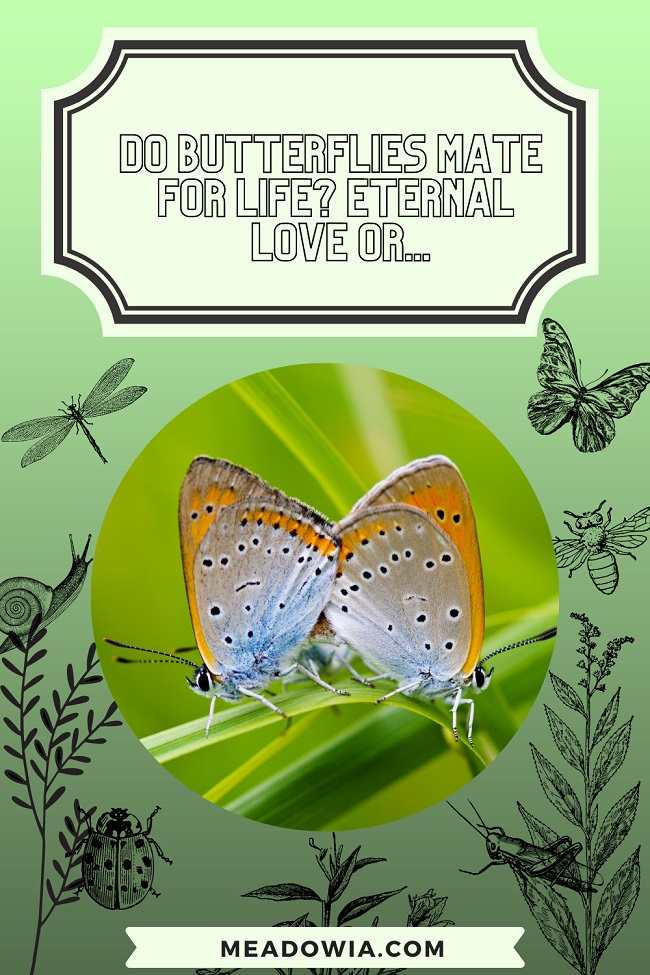 Do Butterflies Mate for Life Eternal Love or pin by meadowia