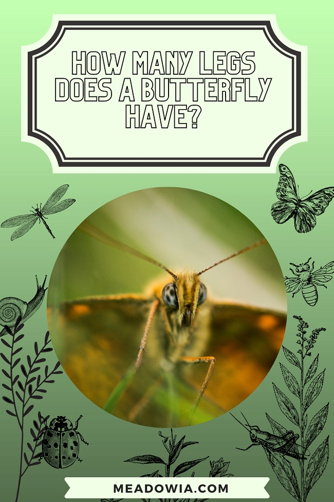How Many Legs does a Butterfly Have pin by meadowia