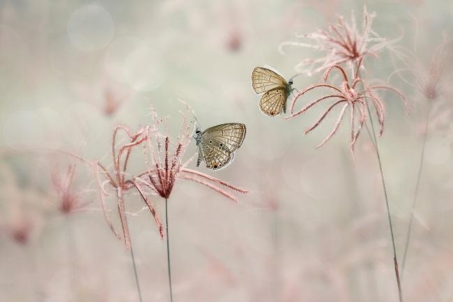 How do Butterflies Communicate featured