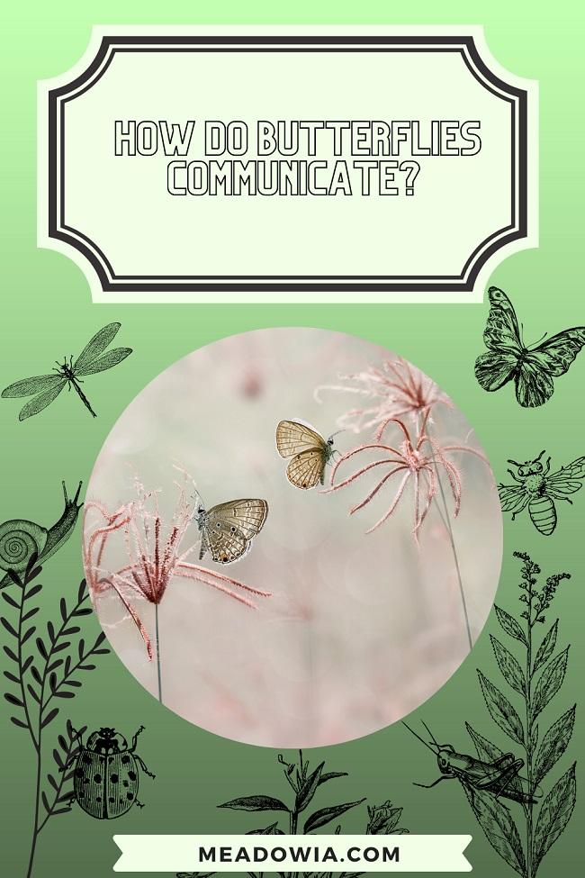 How do Butterflies Communicate pin by meadowia